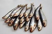 DHA豊富な魚
